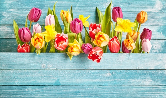 how to make yard beautiful in spring