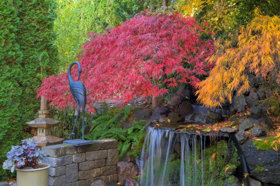 how to create your own asian garden