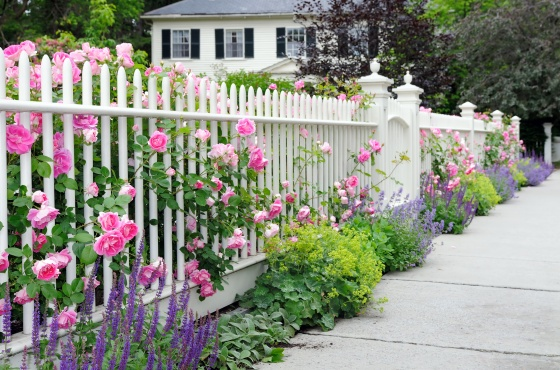 best flowers for curb appeal