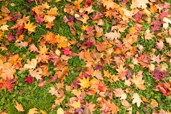 should you rake your leaves?