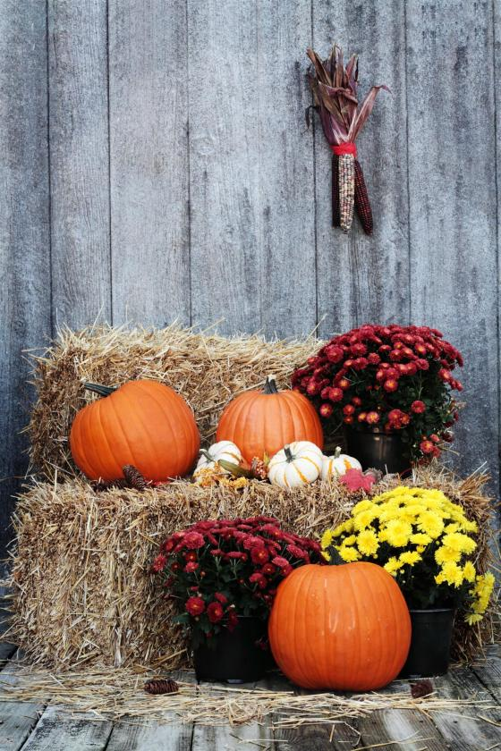 ways to welcome fall into your home