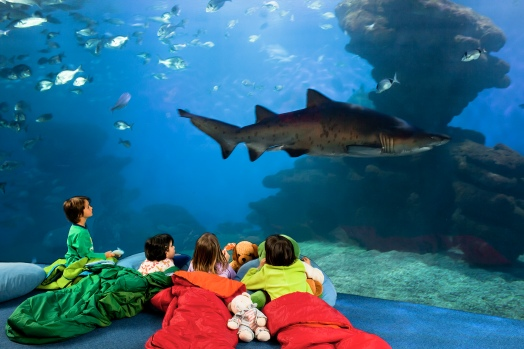 four children stare at sand tiger shark